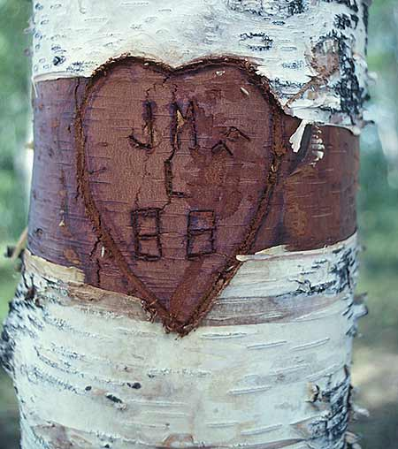 SWEET HEART TREE